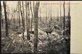Postkarten vom Kriegsschauplatz