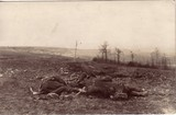 Feldpostkarte - gefallene deutsche Soldaten